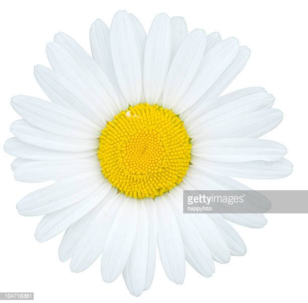 camomile - chamomile tea stock pictures, royalty-free photos & images