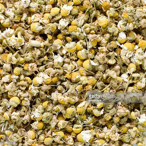 camomile - chamomile tea stock photos and pictures