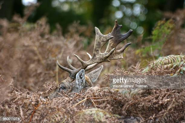 camouflage - wayne gerard trotman stock pictures, royalty-free photos & images