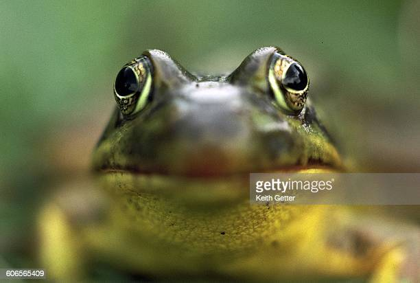 camouflaged creatures  - animal abdomen stock photos and pictures