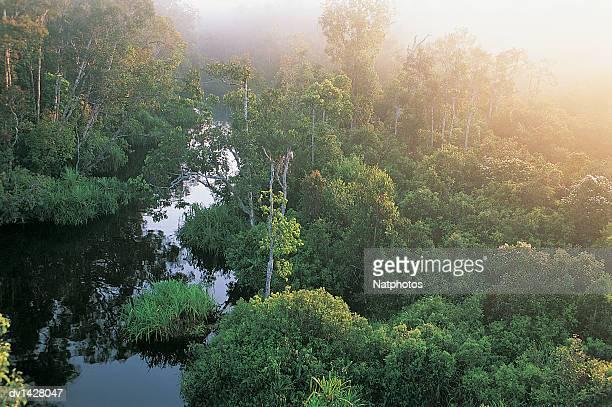Camp Leakey River, Tanjung Puting National Park, Borneo, Indonesia
