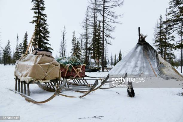 camp of reindeer herders - cliqueimages - fotografias e filmes do acervo