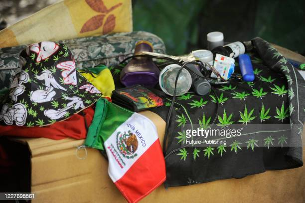 Camp outside the country's Senate building, Mexican marijuana activists have been camping outside the Senate, growing a crop of marijuana plants...