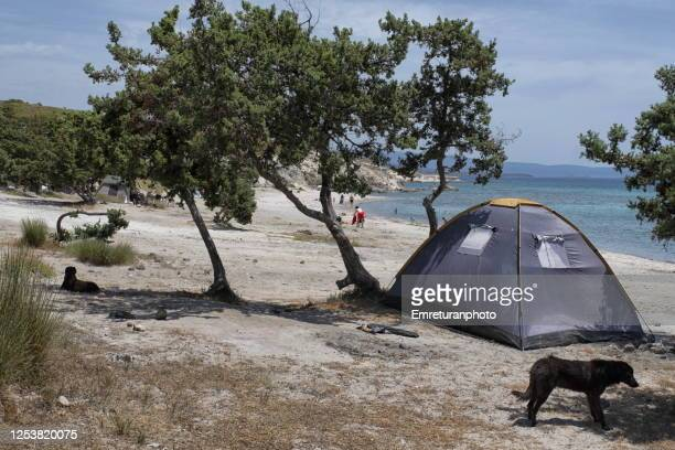 camp tent and dogs at gilikli public beach,alacati on a sunny day - emreturanphoto stock pictures, royalty-free photos & images