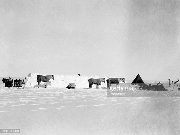Camp with ponies taken during the last tragic voyage to Antarctica by Captain Robert Falcon Scott and his crew among them Lieutenant Henry Robertson...