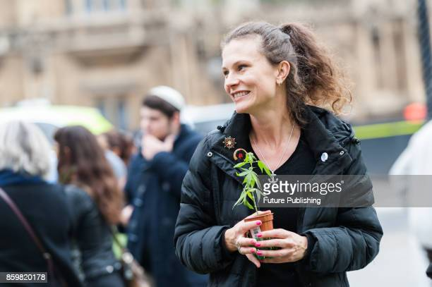A campaigner holds a marijuana plant during a protest organised by the United Patients Alliance outside Houses of Parliament in central London for...