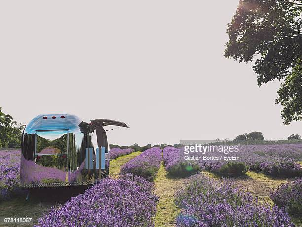 Camper Van At Flower Field