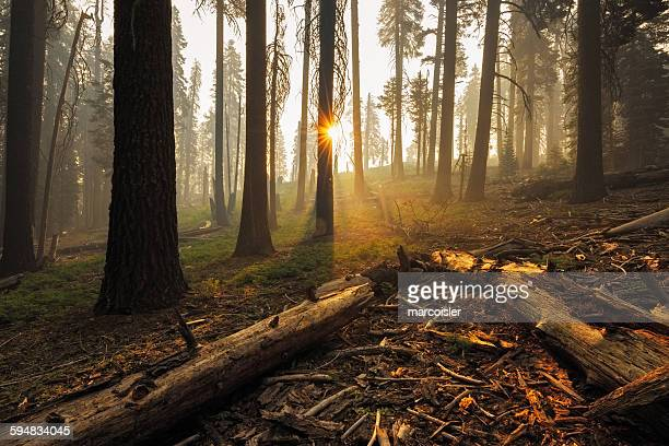 Campfire in the forest, Kings Canyon, California, USA