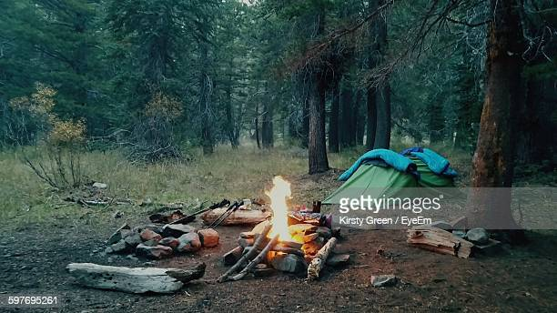 Campfire On Field Against Trees