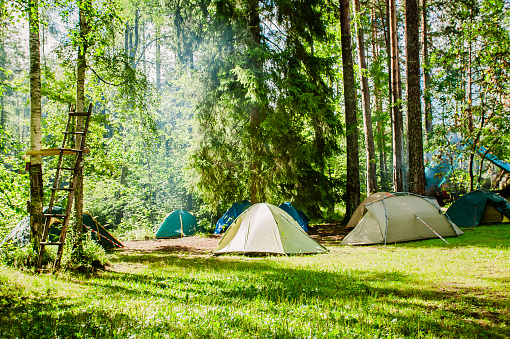 campground on the edge of the forest 1143699251