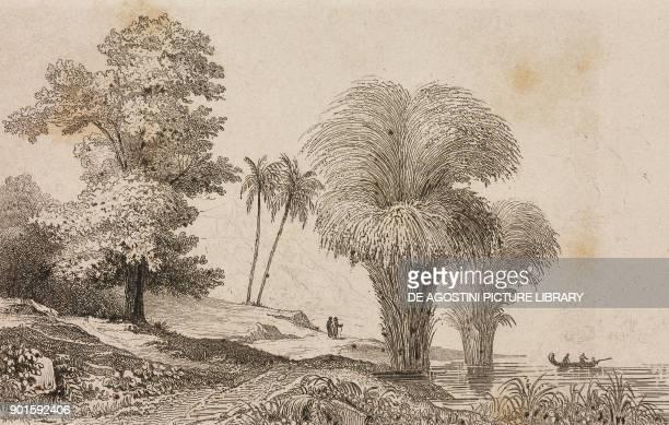 Camphor tree and bamboo engraving by De Rienzi and Chavannes from Oceanie ou Cinquieme partie du Monde Revue Geographique et Ethnographique de la...