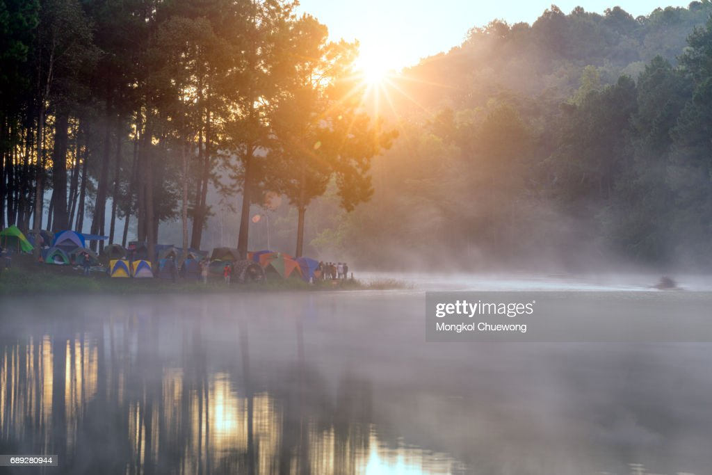 Camping and tent under the pine forest in sunrise : Stock Photo
