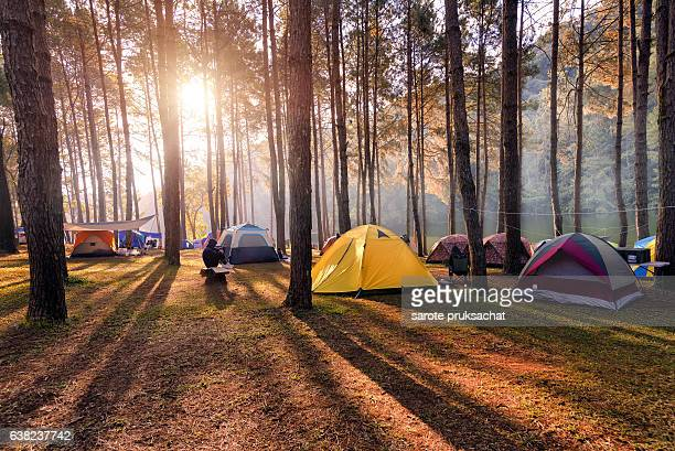 camping and tent under the pine forest in sunset at pang-ung, pine forest park , mae hong son, north of thailand - camping stock photos and pictures