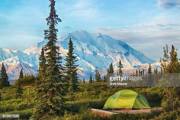 camping in denali national park, alaska, usa - mt mckinley stock photos and pictures