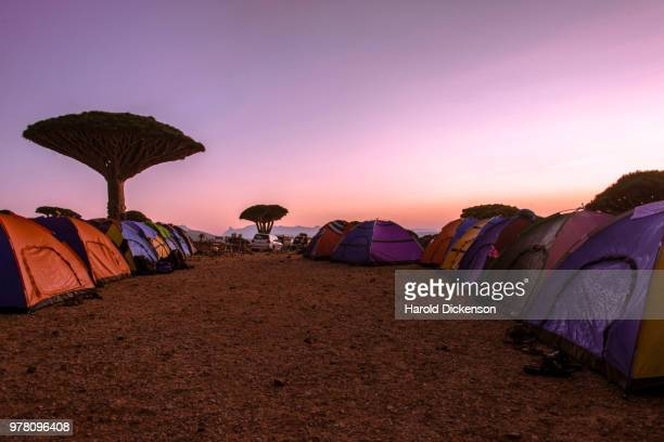camping in socotra - glastonbury stock pictures, royalty-free photos & images