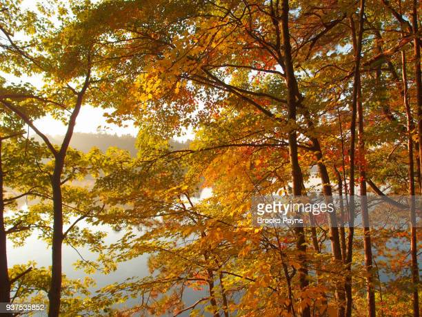 camping spot by a lake. - sturbridge stock photos and pictures