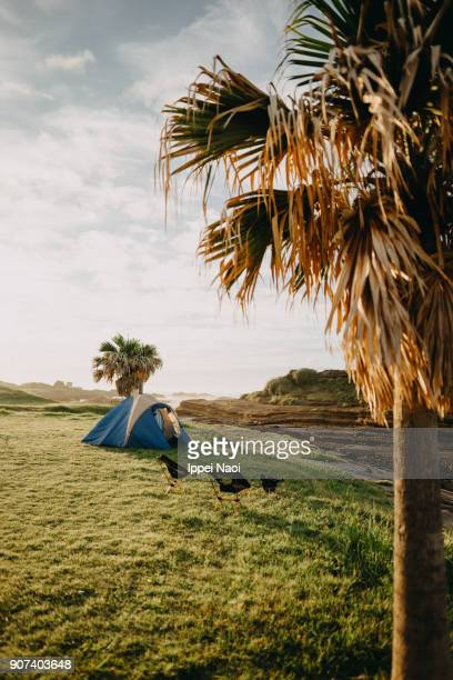 Camping tent by the sea with palm tree at sunrise
