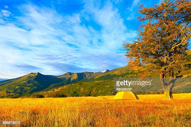 Camping tent, lonely tree, Wilderness landscape gold sunrise, Patagonia