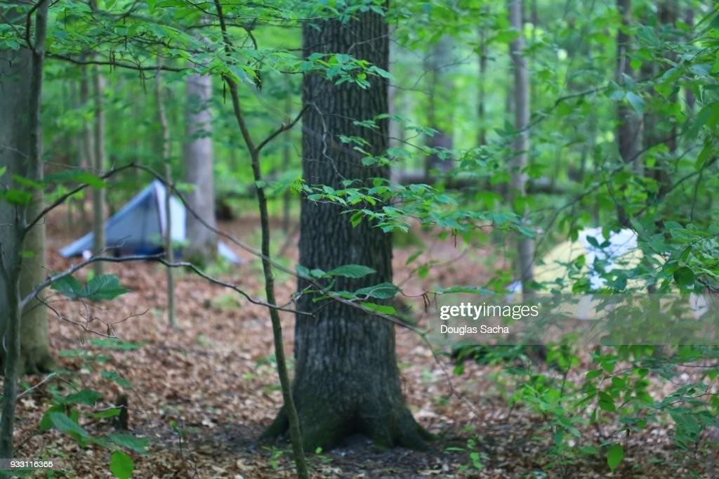 Camping Tents Hidden In The Forest Stock Photo Getty Images