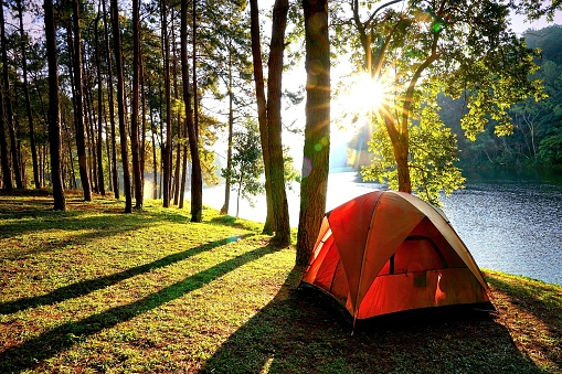 Camping tents in pine tree forest by the lake 649155058