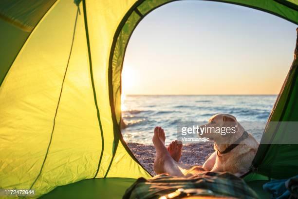 acampamento com cão - perspectiva pessoal - fotografias e filmes do acervo