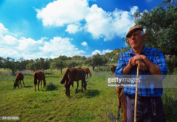 Campino (cattle herder in the Portuguese region of Ribatejo) at work
