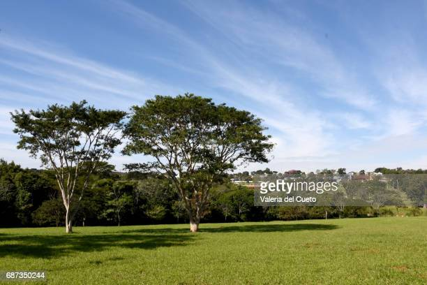 Campo Grande ao fundo da paisagem do Parque das Naçôes