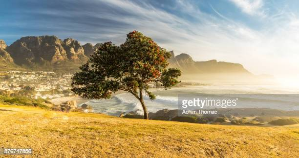 camps bay, cape town, south africa - south africa stock pictures, royalty-free photos & images