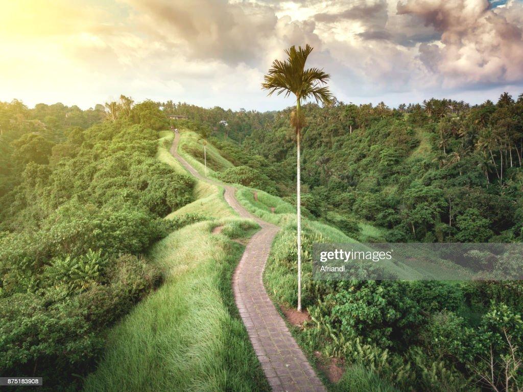 Campuhan Ridge Walk Bali Indonesia Stock Photo - Getty Images