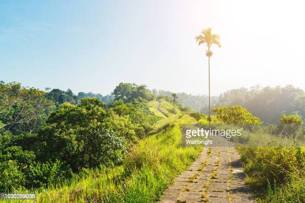campuhan ridge walk,bali,indonesia - ridge stock pictures, royalty-free photos & images