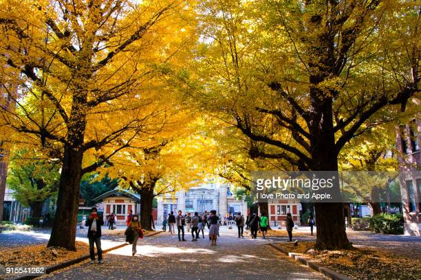 campus of autumn - university of tokyo stock pictures, royalty-free photos & images