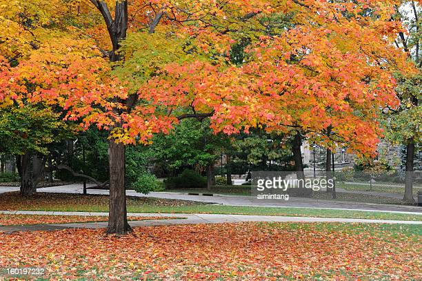 campus of lehigh university - bethlehem stock pictures, royalty-free photos & images