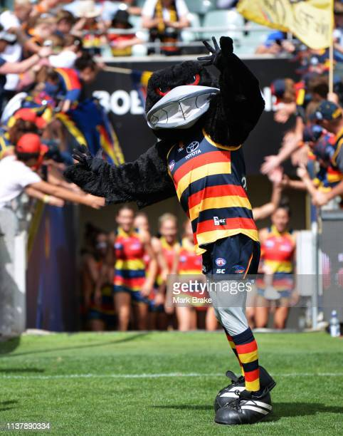 Camry Crow leads the Crows out before the AFLW Preliminary Final match between the Adelaide Crows and thew Geelong Cats at Adelaide Oval on March 24...