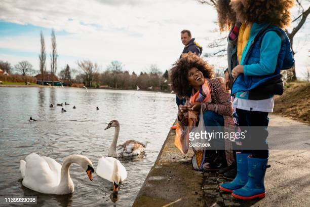 """can i feed the swans, mum?"" - 40 49 years stock pictures, royalty-free photos & images"