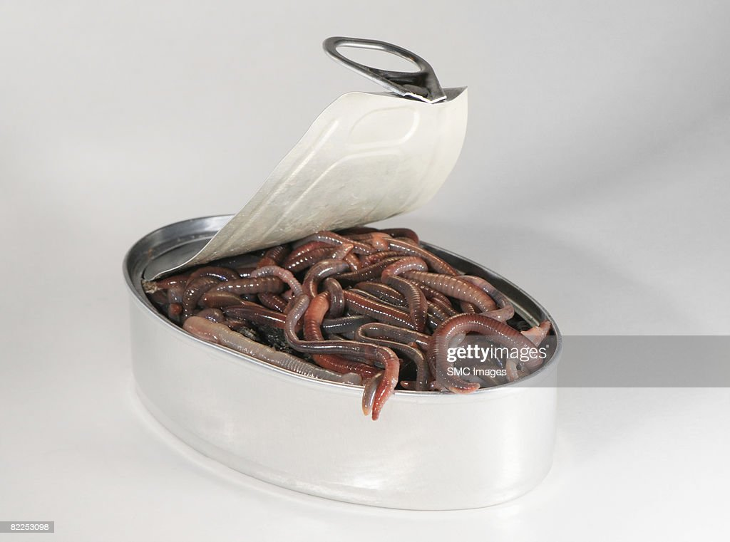 Can of worms : Stock Photo