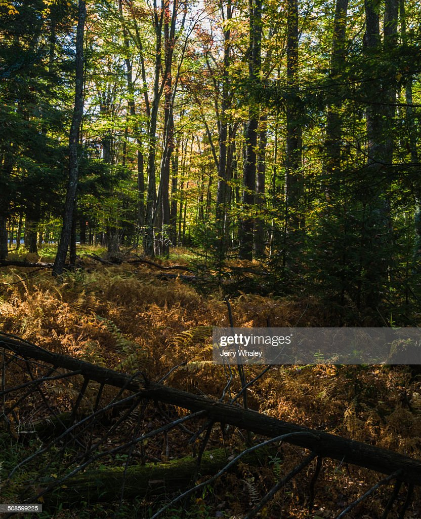 Canaan Valley in Autumn, WV : Stock-Foto