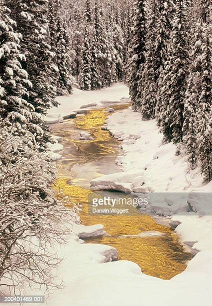 Canada, Alberta, Banff National Park, North Saskatchewan River, winter