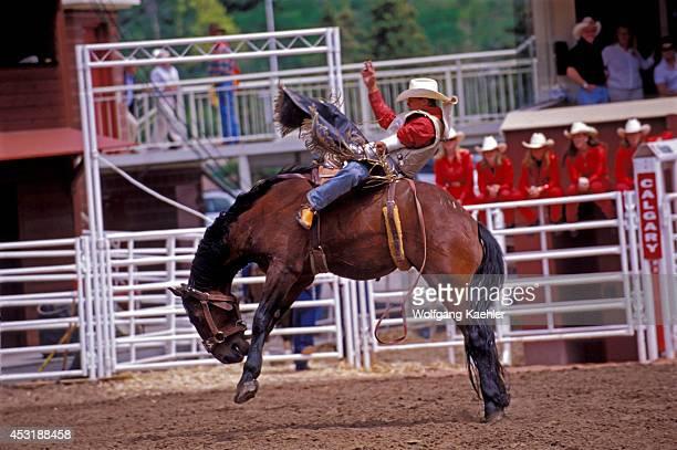 Canada Alberta Calgary Calgary Stampede Stampede Scene Bareback Riding
