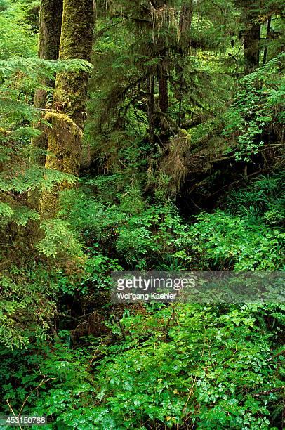 Canada Bc Vancouver Island Pacific Rim National Parktemperate Rain Forest Western Hemlock Red Cedar