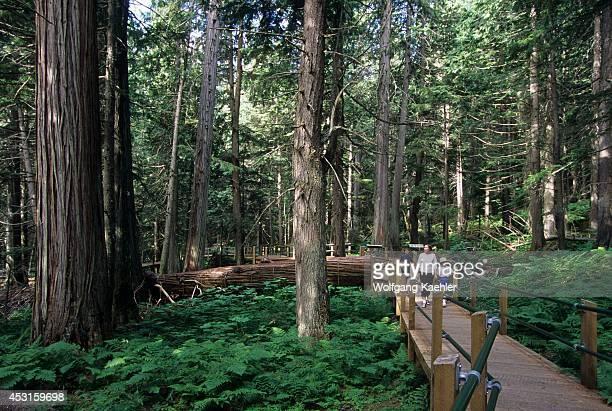 Canada British Columbia Glacier National Park Hemlock Grove Rainforest Tourists