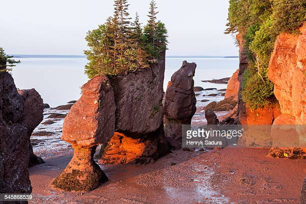 canada, new brunswick, moncton, hopewell rocks with trees on top at sunrise - moncton stock photos and pictures