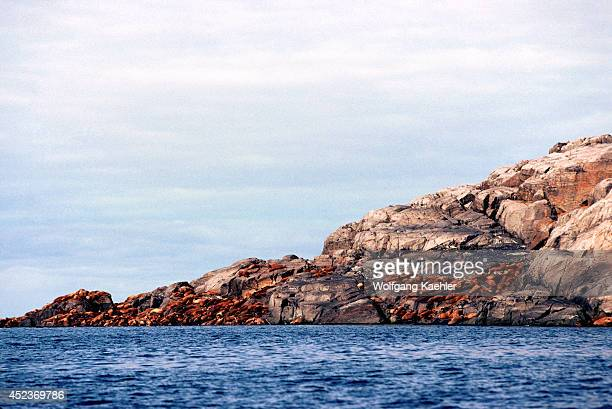 Canada Nw Territories Hudson Bay Walrus Island View From Sea Walrus On Rocks