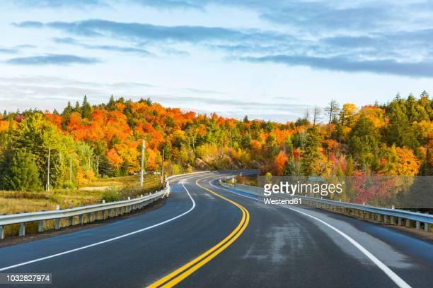 canada, ontario, main road through colorful trees in the algonquin park area - ontário canadá imagens e fotografias de stock