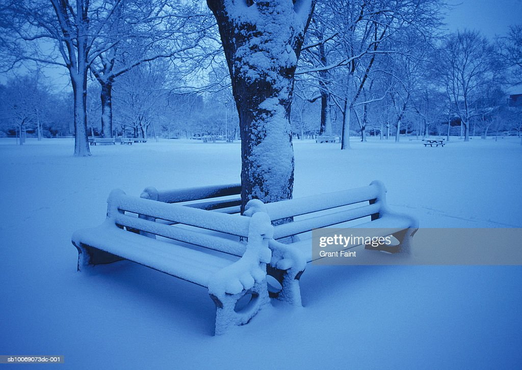 Canada, Ontario, Toronto, park benches under tree in snow : Stockfoto