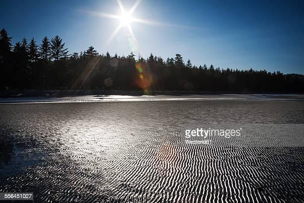 Canada, Vancouver, seafloor at low tide