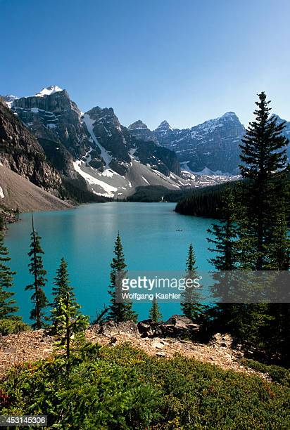 Canada,alberta,rocky Mountains, Banff National Park, Moraine Lake, Lodgepole Pine Trees.