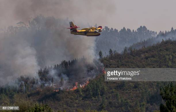 Canadair CL215 firefighting amphibious aircraft drops water over a forest fire on August 14 2017 in Ferreira do Zezere Portugal The Portuguese...