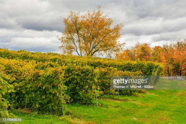 canada-quebec-eastern townships-sutton-winery - eastern townships stock pictures, royalty-free photos & images
