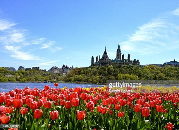 Canada's Parliament Buildings and tulips