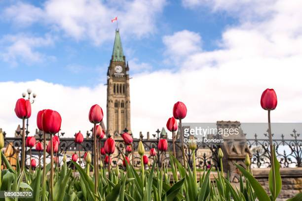 Canada's Parliament Buildings behind red tulips and a wrought-iron fence